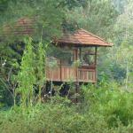 Foto de Jungle Retreat Wayanad