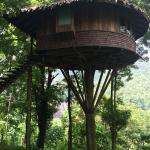 our tree house- rainforest resort