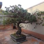 El Bonsai