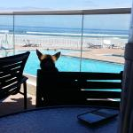 Photo de Hyatt Place Daytona Beach - Oceanfront