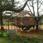 The new treehouse being built