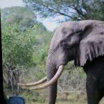 Photo de Tembe Elephant Park Accommodation