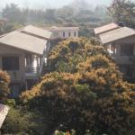 room with blooming mango trees