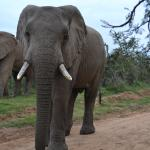 Addo Elephant Back Safaris의 사진