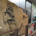 fossil wall