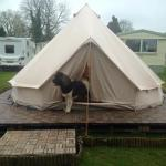 Chewbacca loving the King treatment in the Bell Tent :)