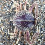 Little crab on our beach walk