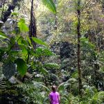 Jungle hike to waterfalls on the hotel property
