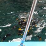 Snorkelling close by...