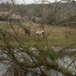 The stream and horses next door