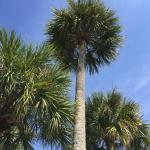 Best Palm Tree Pic