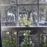 View from living room window