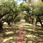 Photo de Oak Alley Plantat
