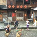 Chickens in the courtyard