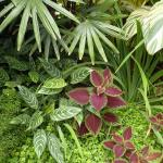 Colors and textures in the conservatory