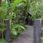 Dining hut in the rainforest