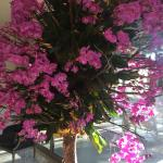 Orchid tree in the lobby seating area