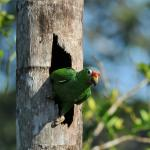 Parrots nesting right on the property