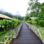 Photo of Borneo Rainforest Lodge