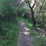 Hiking trail - Chaminade Resort