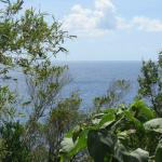 Photo de Jungle Bay, Dominica