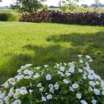 Duck Pond Bed and Breakfast Cottage Foto