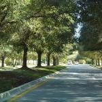 part of the beautiful 1 1/2 mile  driveway around the grounds