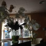 Large triffid in reception