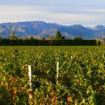 Bilde fra Marlborough Vintners Hotel Heritage Boutique Collection