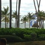 Shrubbery separating the beach from the hotel/pool area