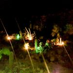 The cacti garden at night