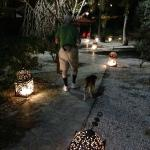 attractively rusty lanterns light the way for my husband and the official hotel dog
