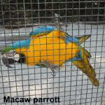 Loved the colorful macaws
