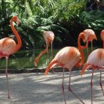 My favorites the flamingoes!