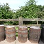 Barrels ready for filling with cider