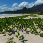 Cardwell Motel gives you quick access to Hinchinbrook Island - right from the beach with John