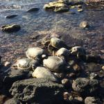 Turtles on the Rocky Beach