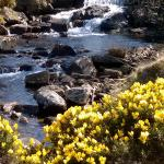 The beautiful scenery of Dartmoor seen on our guided walk led by Martin to Snipers Gulley