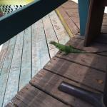 Iguana under our table at Skinny Legs