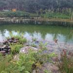 the natural filtered swimming pool