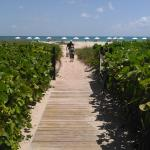 The beautiful walkway through the mangroves to the pristine beach.