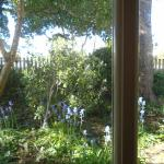 garden view from French doors