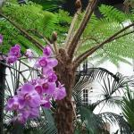 Some of the zillions of orchids