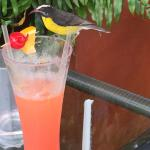 A little colourful friend shares a cocktail by the pool!