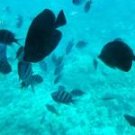 Snorkelling and glass bottom boat