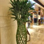 Plant in Lobby