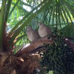 These love birds are in a palm tree on the porch of the Atlantic Edge restaurant at the Cheeca L
