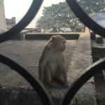 Watching the Monkeys  outside our window :-)