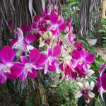 Orchids, they really are everywhere, it's a small verdant paradise