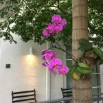 Orchids outside!!